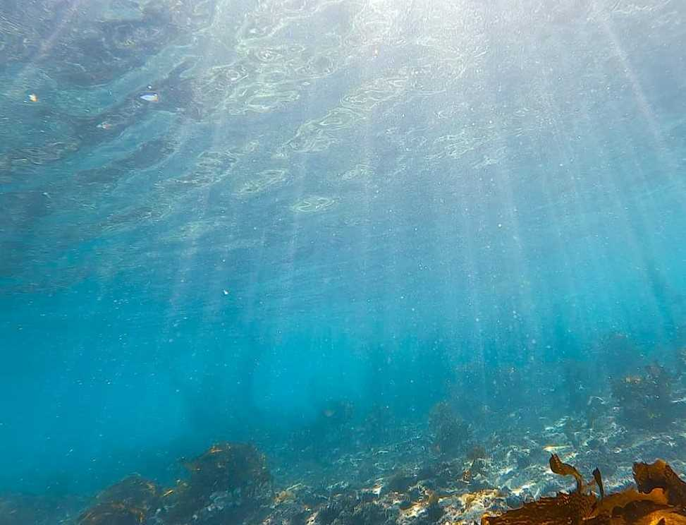 逗子の海底(OCEANS CLUBのFBから)